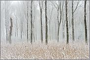 Wintereinbruch... Ilvericher Altrheinschlinge *Rheinkreis Neuss*